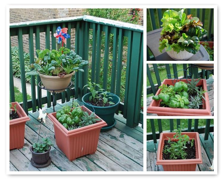My Deck Veggie Garden