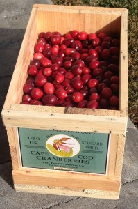 My delivery of Flax Pond cranberries in a hand crafted crate