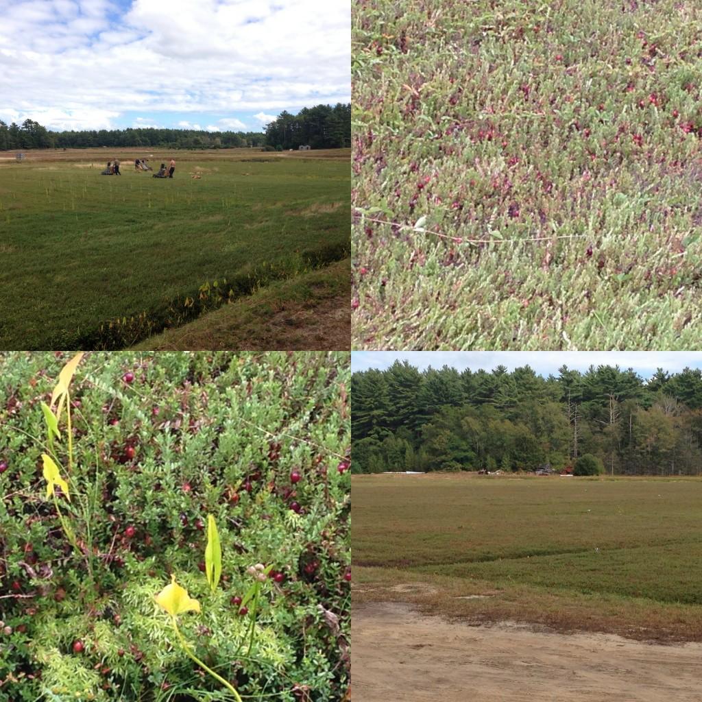 Flax Pond Farms - September 2013