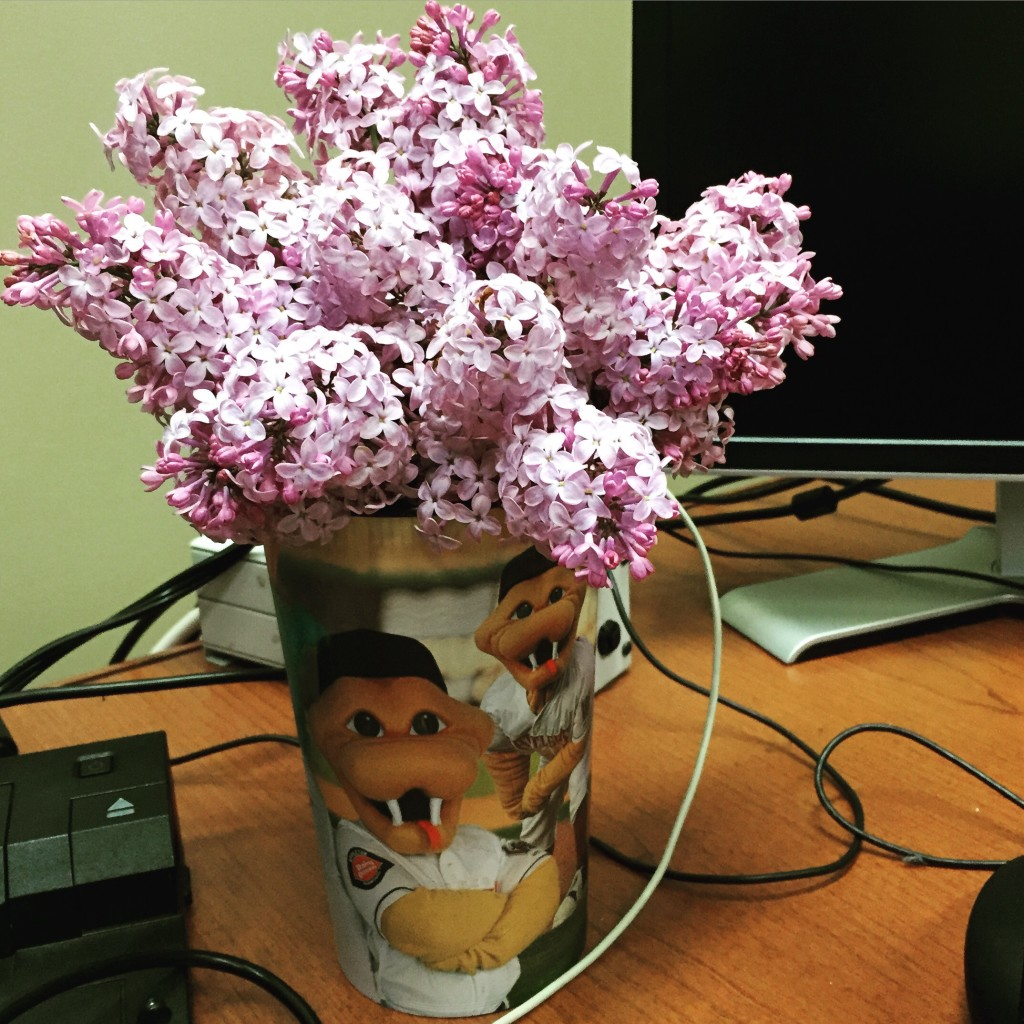 Tradition - Lilacs on my desk in Marinette!